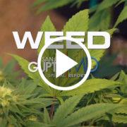 portada documental weed sanjay gupta